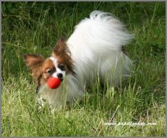 Софи и мяч