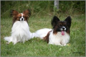 папильоны Фишер и Софи