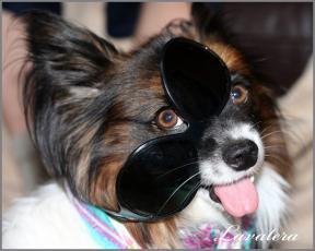 Фишер и очки :-)