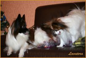 Фишер и София