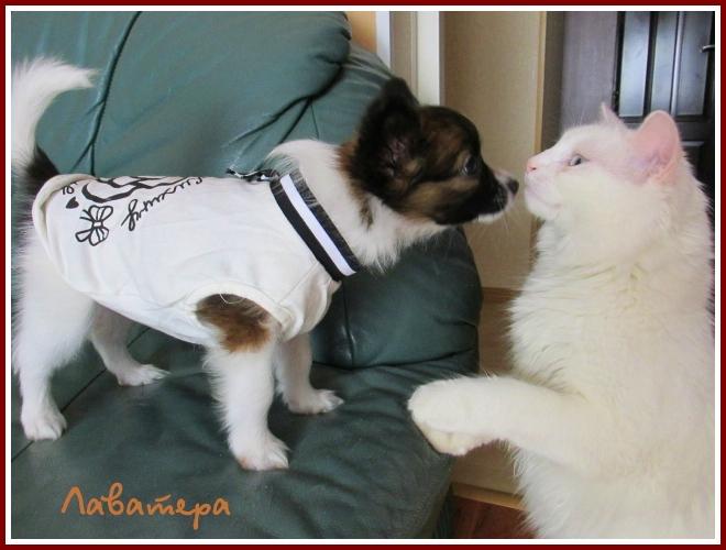 щенок Глаша и кошка Киса