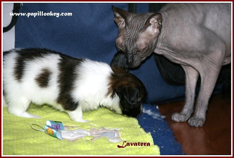 щенок Глаша и кошка Мауся