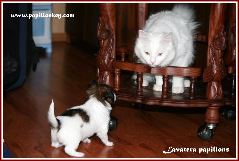 щенок Мия и кошка Киса