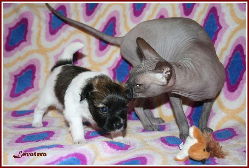 щенок Зуля и кошка Мауся