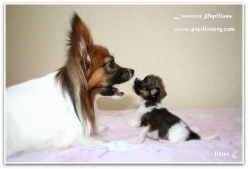 elvis & mom